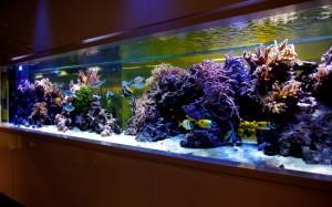 Разбираемся, как моют аквариум?  Учимся правильно проводить чистку