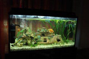 Разбираемся делать сифон для аквариума своими руками или купить готовый?