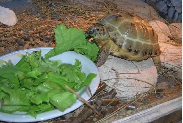 водная черепаха ест в домашних условиях