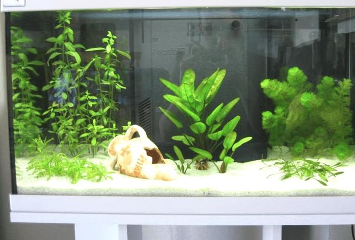 отстаивается для аквариума