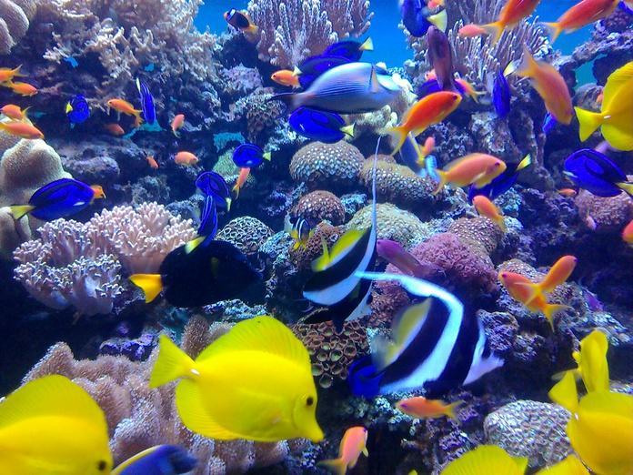 в морском аквариуме