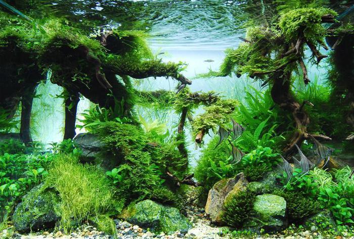 Псевдонатуральный стиль оформления аквариума