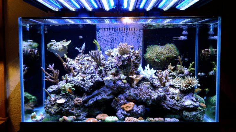 Фото аквариума со светодиодной подсветкой