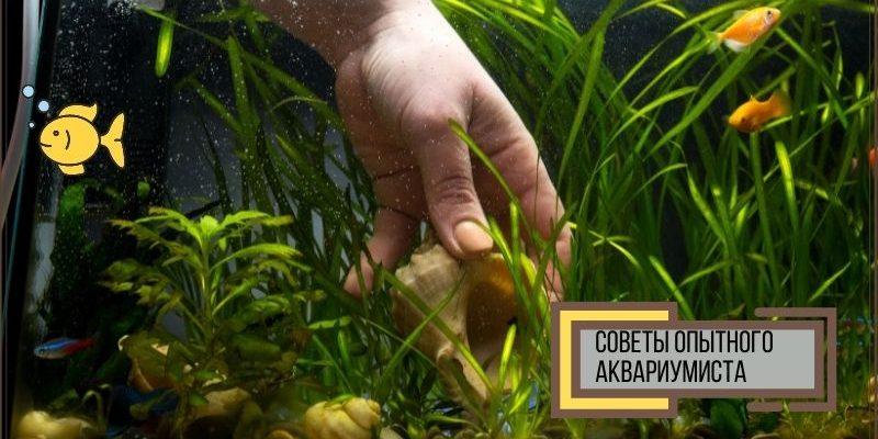 Советы начинающему аквариумисту